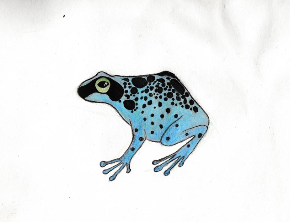 blue froggo